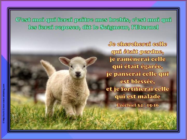 Je fortifierai celle qui est malade - Ezéchiel 34 : 15-16