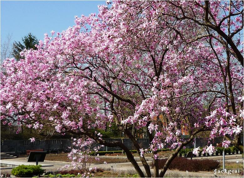 Vive le printemps !