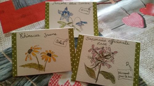 Mes petite pochettes d 'echange de graines du jardin