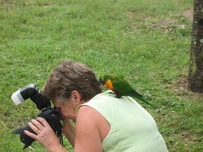 perroquets-vert-Clairview--93-.jpg