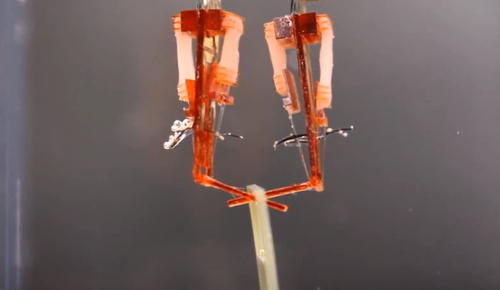 Ce petit robot est muni de vrais muscles !