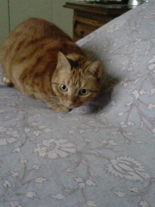 c'est pas une vie de chatte ça!!!!!