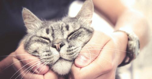 Pourquoi le chat se dirige vers la personne qui ne l'aime pas