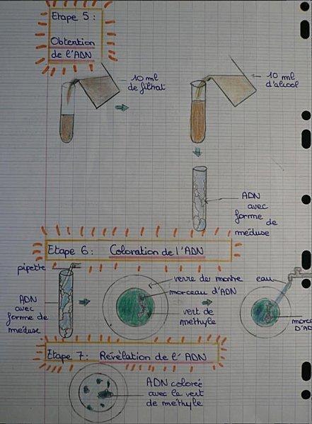 adn-4.jpg