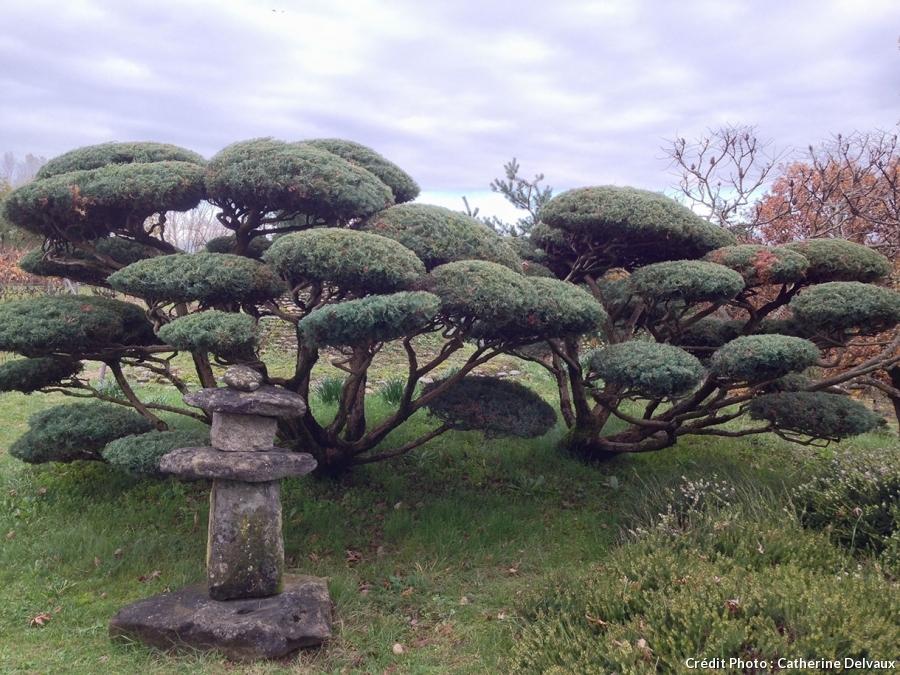 Jardin de Borja, juniperus