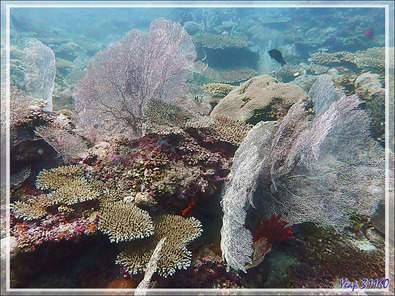 La plongée aux gorgones - Bank des Frères - Tsarabanjina - Mitsio - Madagascar