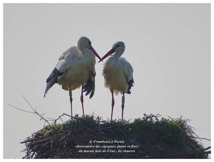 Observatoire des cigognes, faune et flore du marais Bois céné 2017