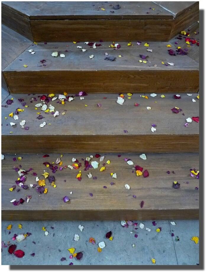 Un escalier fleuri...les fleurs ignorent le gris...