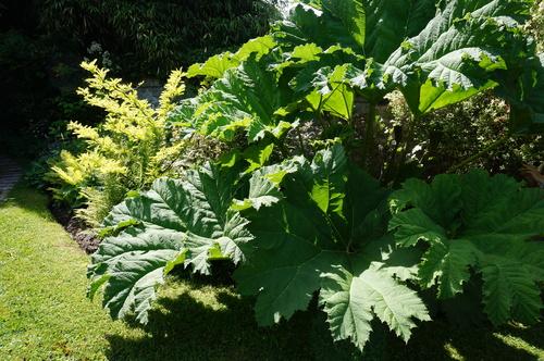 Jardiniers de l'Yvette : chez Anne