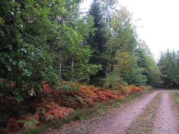 Le Morvan en automne...