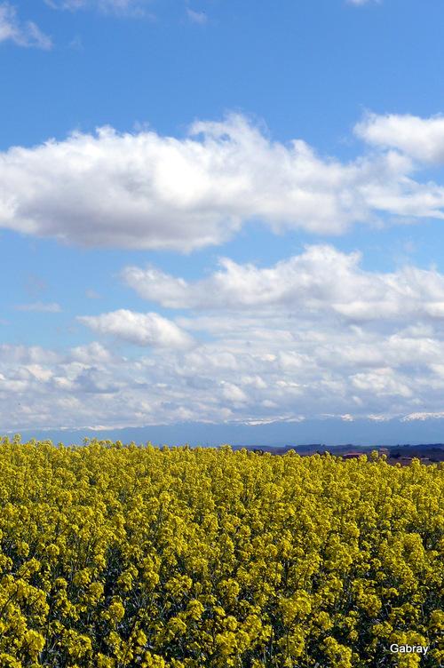 Lauragais: colza & paysages