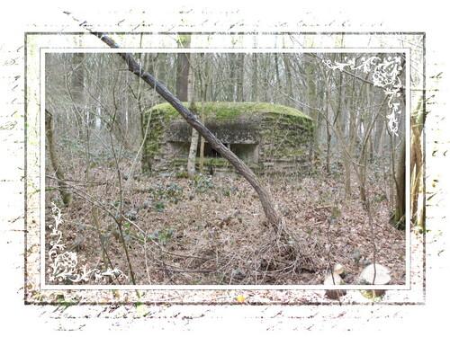 Le Blockhaus dans les bois ploegsteert
