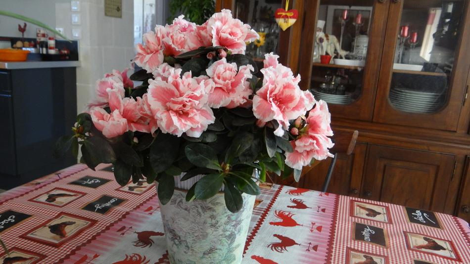 On Aménage Doucement le Petit cours d'Eau + La Fleur de fin de Semaine
