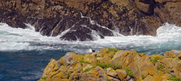 31 reserve de Cap sizin