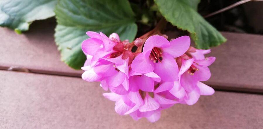 bonne semaine avec des fleurs....