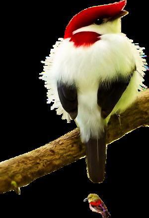 Oiseaux Page 2