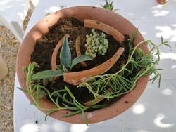 Tutoriel : Une jardinière de plantes grasses