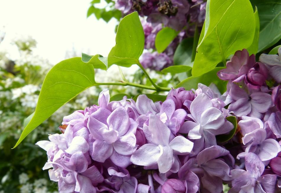 Mes dernières fleurs d'avril