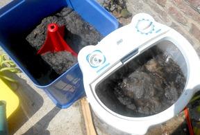 lavage de toison de laines