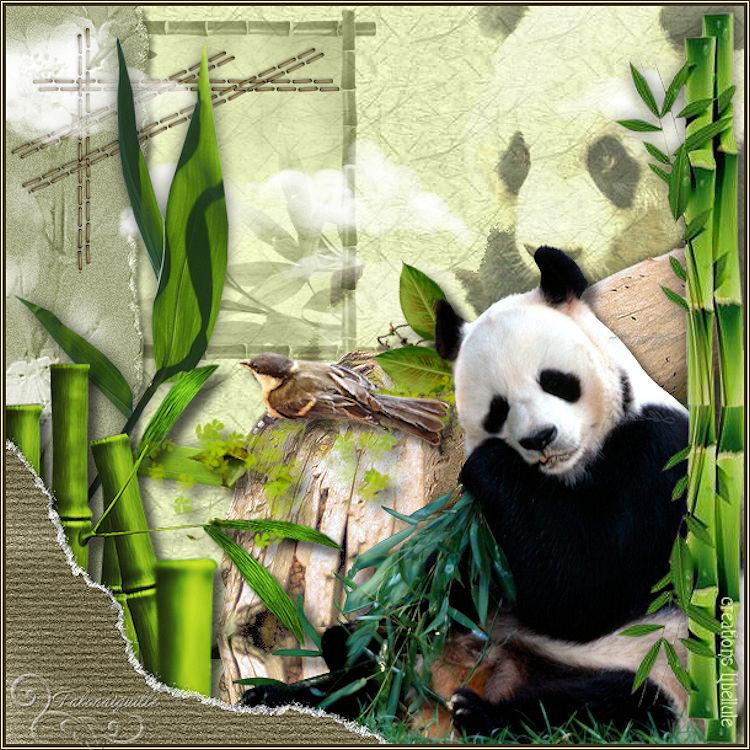*** Panda Huan Huan ***