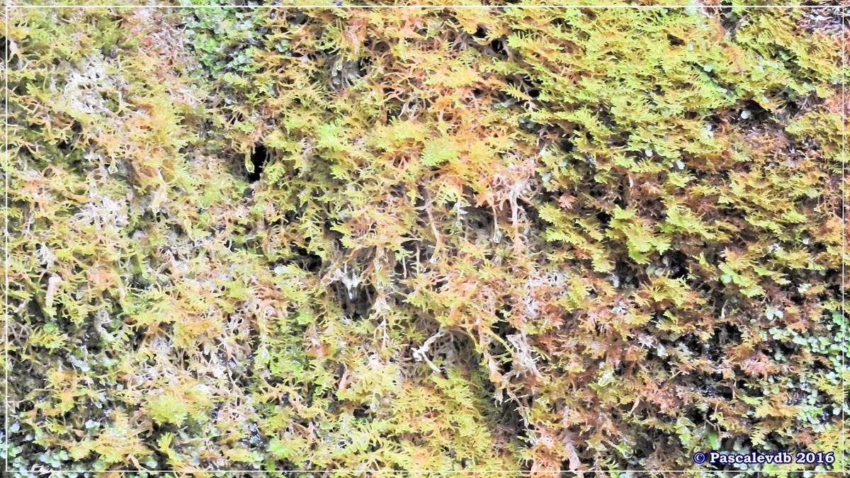 Réserve géologique de Saucats - Août 2016 - 5/10