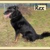 Rex B 2