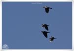 Oiseaux Variés