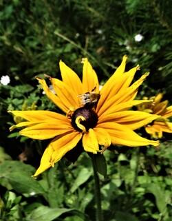 Scènes estivales dans le jardin 2 (3ème partie)