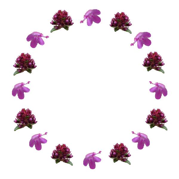 Cercle serpolet