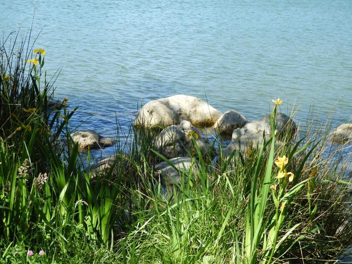 Ca souffle au lac !