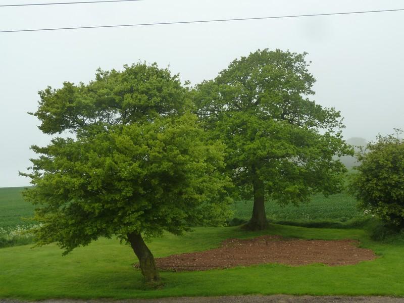 """""""Vie d'un arbre"""" ..."""