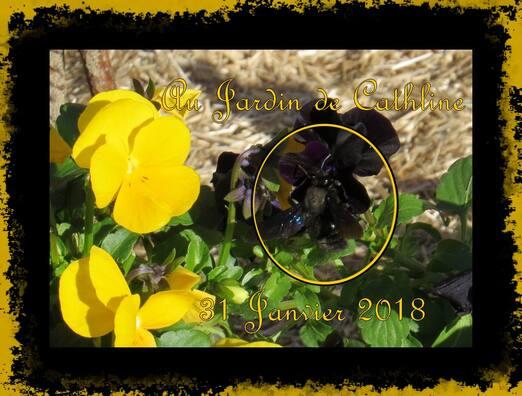Balade au jardin et Avec la lune du 1er au 10 février