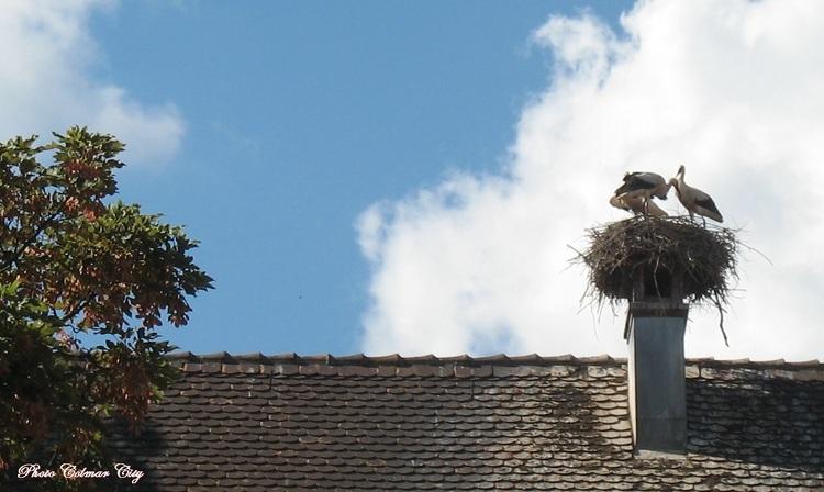 Munster (68) : Ville des cigognes