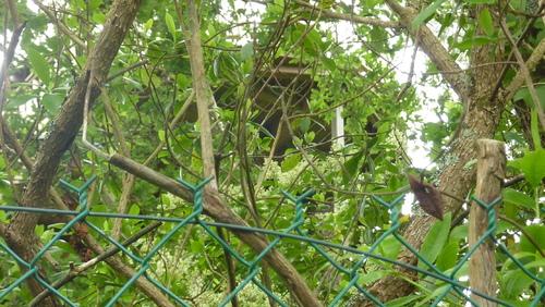 Jeudi 14 juin : Riec-sur-Belon