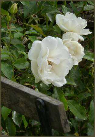 Schneeflocke (opalia)