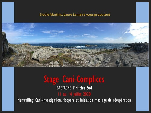 stage Cani-complices en Bretagne