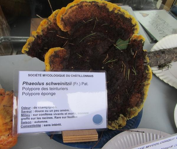 Voici la plupart des espèces de champignons, récoltées lors du séjour de la Société Mycologique du Châtillonnais dans le Morvan