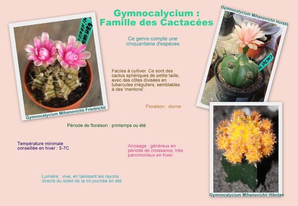 Gymnocalycium - Culture et Entretien