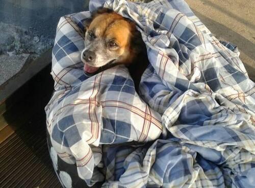 (-*♥*-)  Ces trois chiens errants passent la nuit dans une station de bus, afin d'éviter le froid – regardez-les, maintenant qu'ils ont chacun un lit bien à eux.