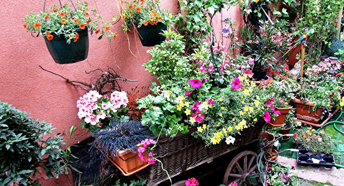 2-Alsace / des fleurs aux balcons !