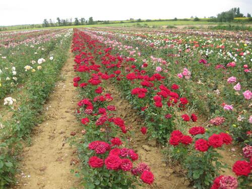 Fleurs du samedi gérées par Jean Pierre