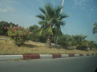 Photos de Tunisie