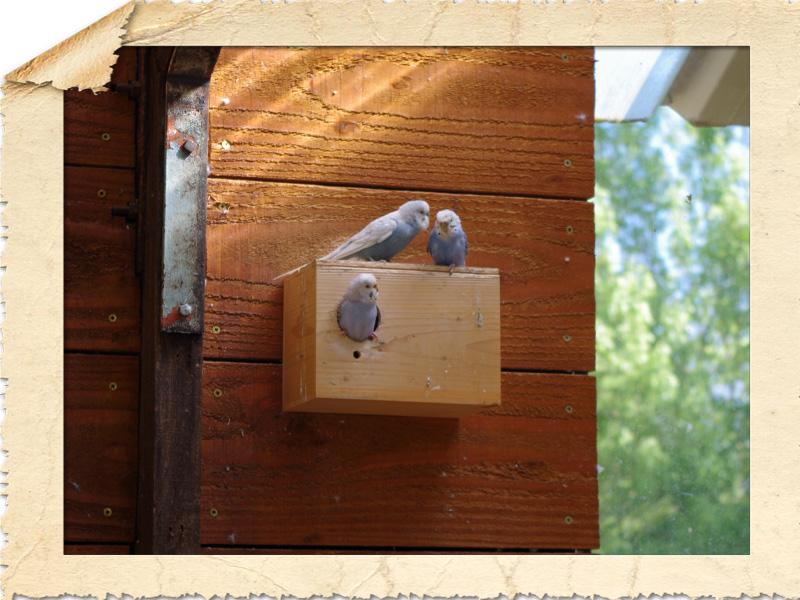 21350 Arnay sous Vitteaux  Parc de l'Auxois