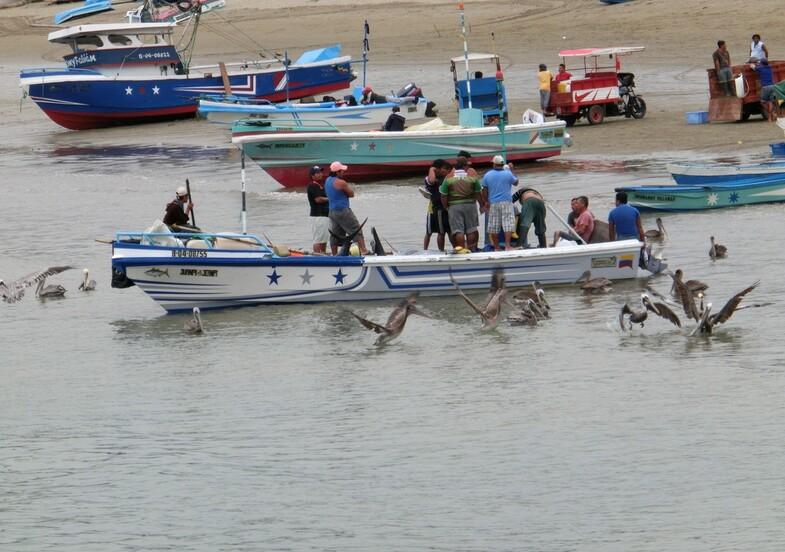 A Puerto Lopez. Pêcheurs et pélicans.