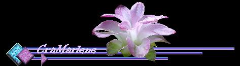 ♥ Le lotus ♥