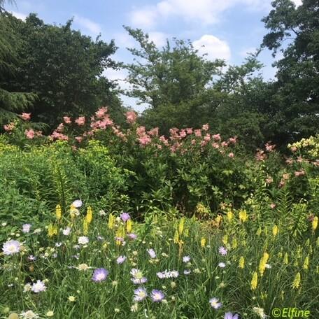 Dans les jardins de Kew