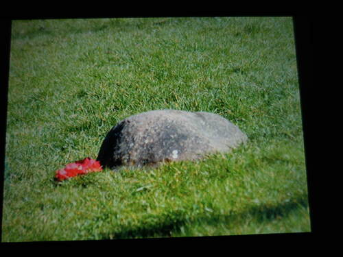 Pour le clin d'oeil insolite de Turtle