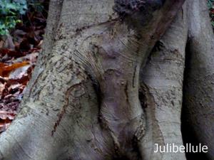 Julibellule