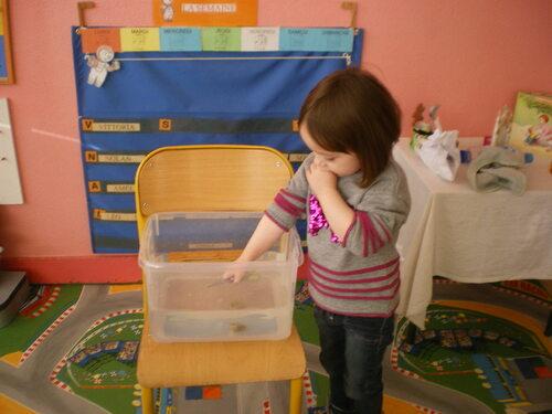 L'eau : Coule ou flotte? (P.P.S./P.S.)