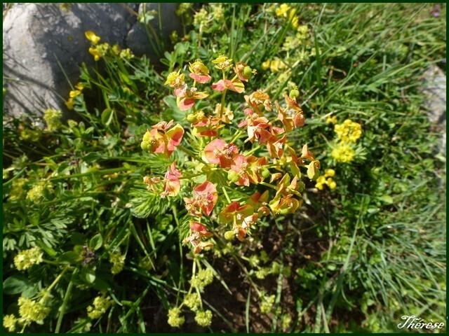 Flore du Grand Colombier (11)